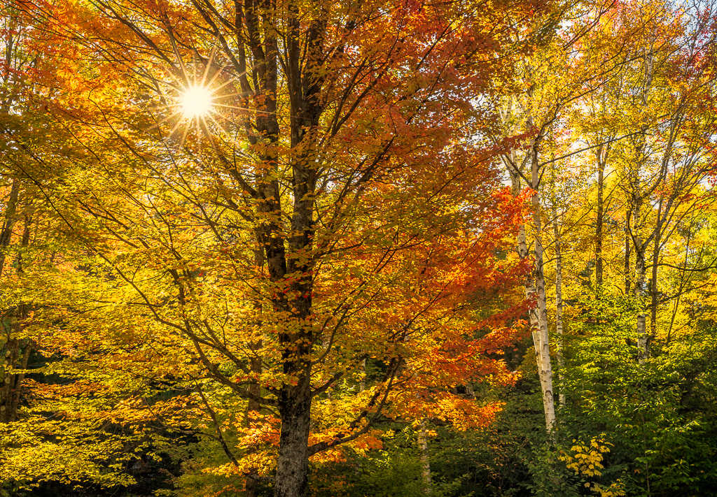 Autumn in Vermont Photography Workshop  Green Mountain