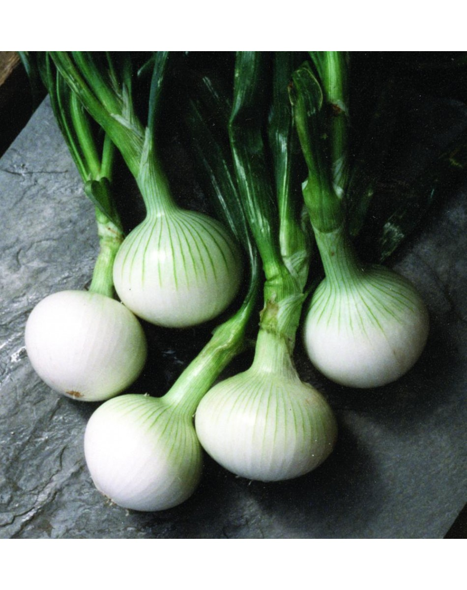 compost container kitchen free standing islands with seating white sweet spanish onion heirloom seeds pack of 25 ...