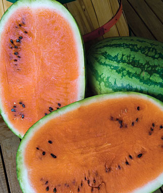 kitchen compost container flush mount lights tendersweet orange watermelon heirloom seeds pack of 25 ...