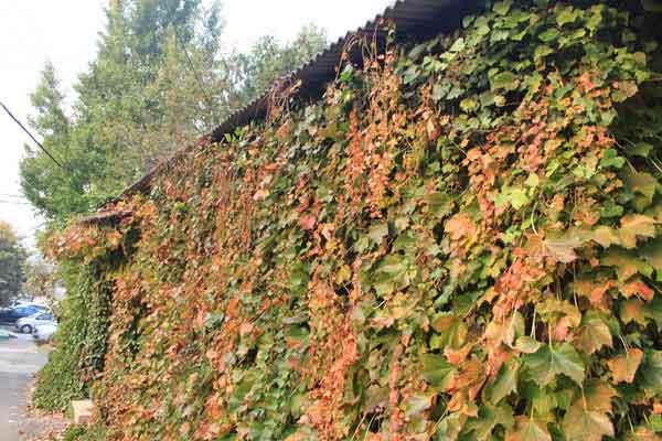 단풍-단풍이 드는 이유-가을
