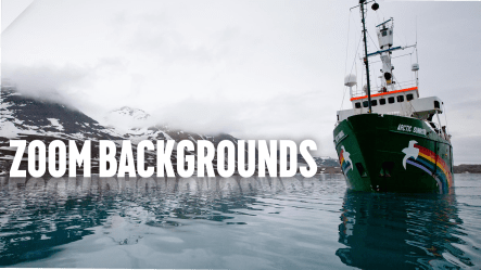 Zoom backgrounds: 25 Free Zoom background images for the Covid lockdown Greenpeace New Zealand