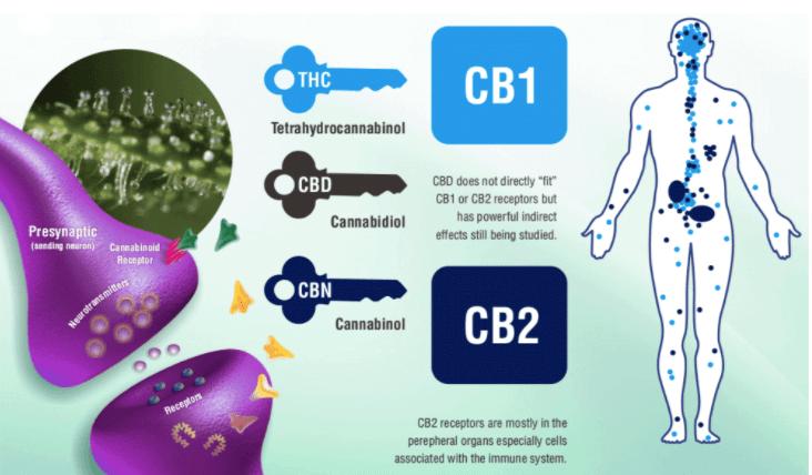 Gotas de CBDde nueva generación 100% garantizado