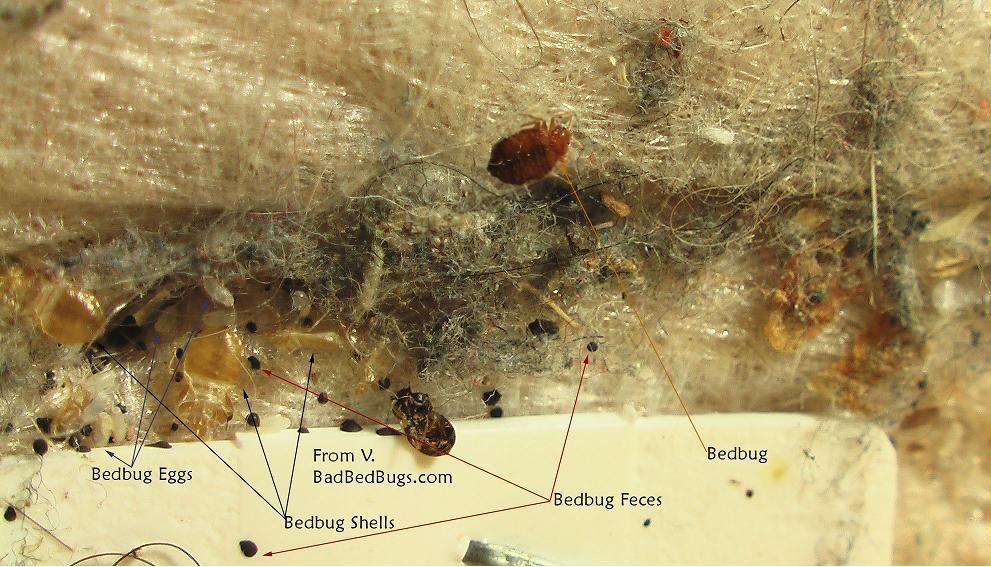 Bed Bug Infestation Greenpestcontrolmns Blog Page 8