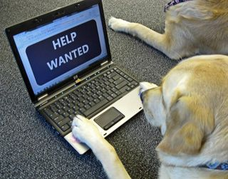 Dog Help Wanted