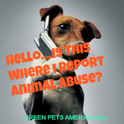 DOG CELL IPHONE CALLING ANIMAL ABUSE