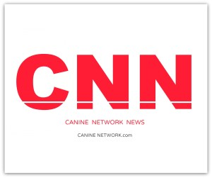 cnn canine network news