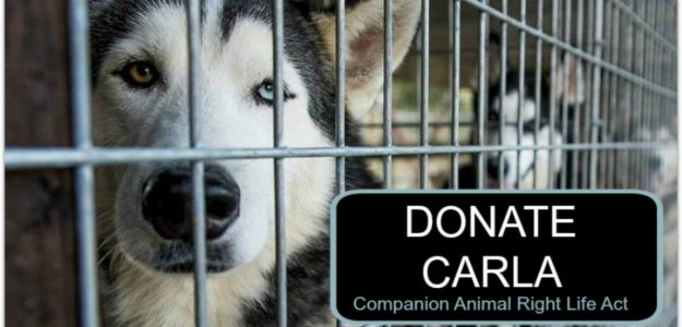 do companion animals have a right to life