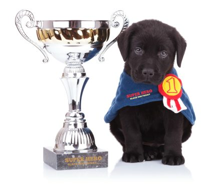 Black Dog Friday Super Hero Award