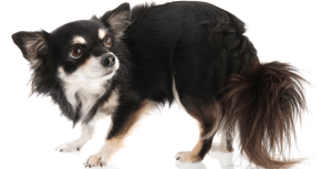 5 Tips to Help Anxious Fearful Dogs