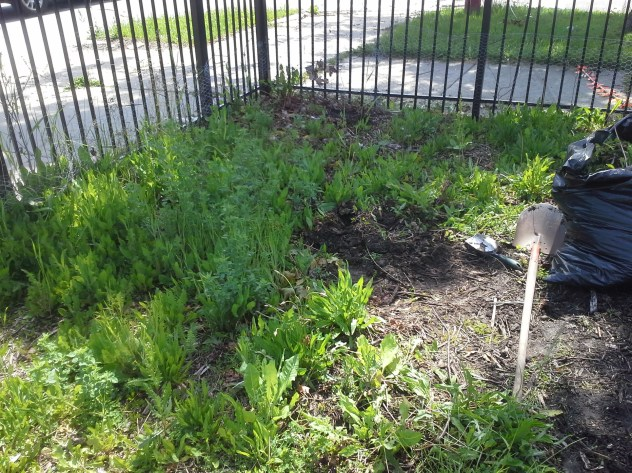 This was the NE corner of the lot that I weeded