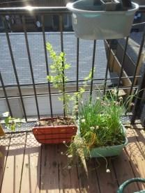 The wild plants