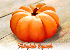 Fairytale Pumpkin.