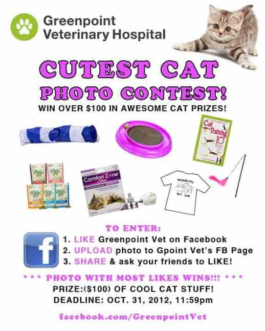 cat photo contest