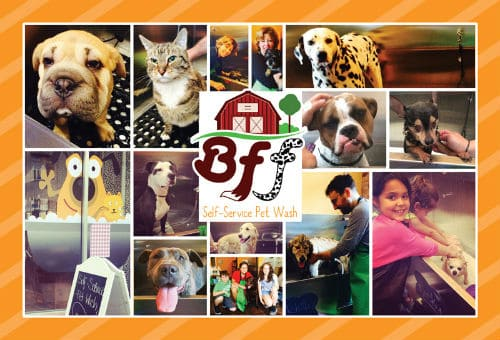 BFF's Self Service Pet Wash's Grand Opening is This Friday!