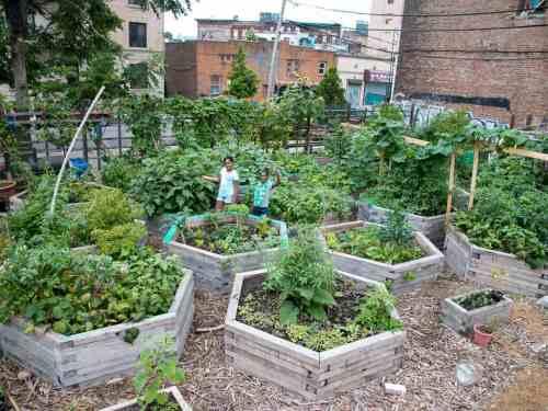 Bushwick City Farm c/o Brooklyn Spaces