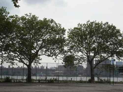 Barge Park