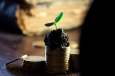 Plant Growing Out of Coin Stack