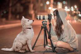 Dog Sitting In Front of Camera and Photographer