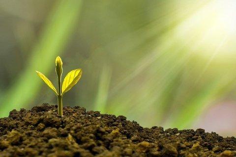 Sapling Growing In Soil