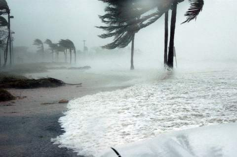 Storm Surge and Palm Trees