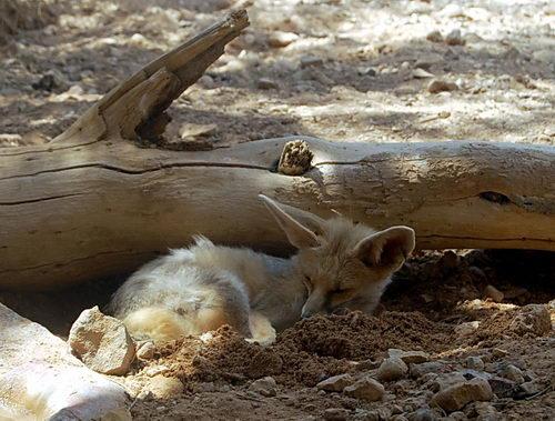 fox-haibar-t[1]