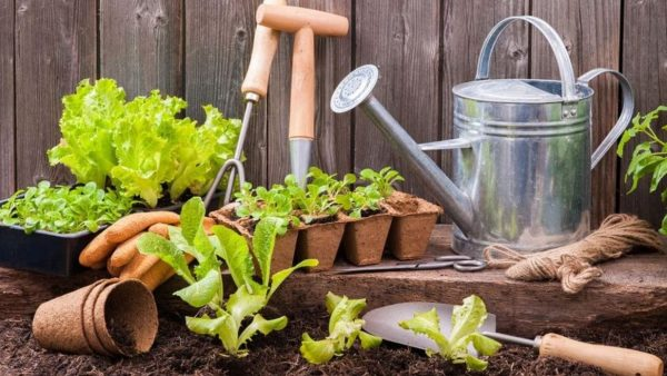 Top 10 Fast Growing Veggies for Your Garden