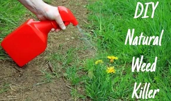 DIY: Natural Weed Killer
