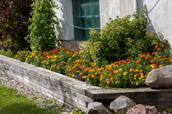 Budget-Friendly Ways To Fill Your Flower Bed