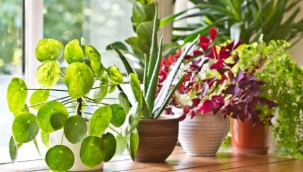 Plants You Should Never Bring In Your Home