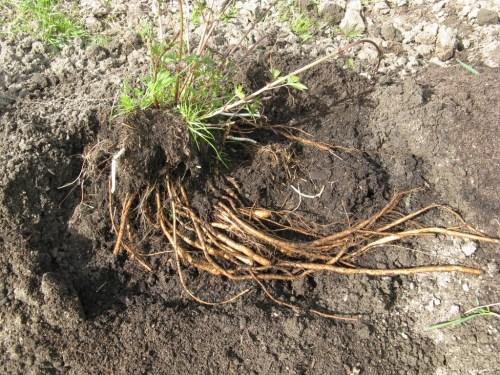 farm-april-20-2009-028