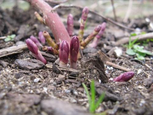 farm-march-2009-004