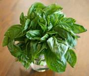 Fresh Basil for Homemade Pesto Recipe