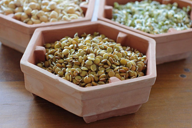 Homemade Sprouts - Lentils, Chickpeas and Mung Beans