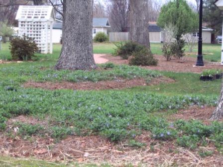 plant in greensboro natural