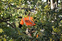 green-scene-tree-service-3