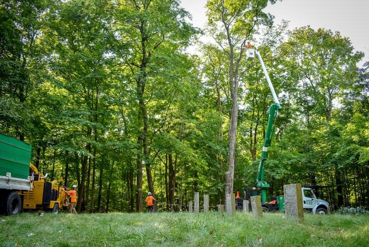 green-scene-saluting-branches-9
