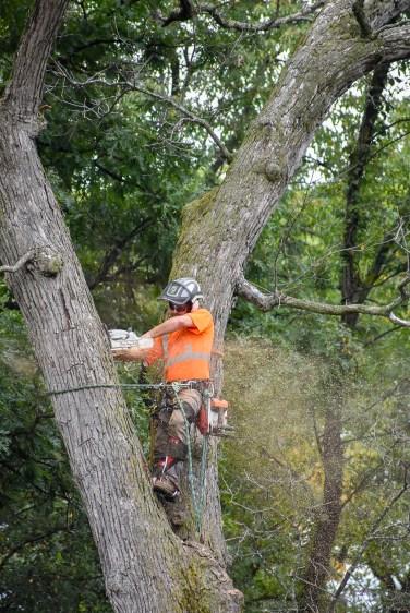 green-scene-tree-service-10