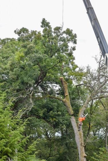 green-scene-tree-service-12