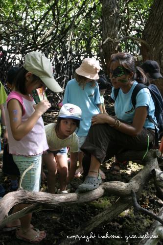 rww-mangrove-tour