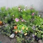 Wildlife Friendly Flowers