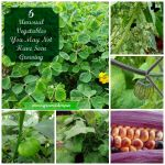 6 Unusual Vegetables You May Not Have Seen Growing
