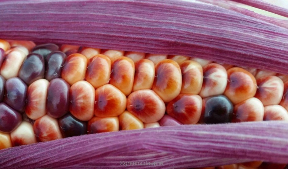 6 Unusual Vegetables You May Not Have Seen Growing Before