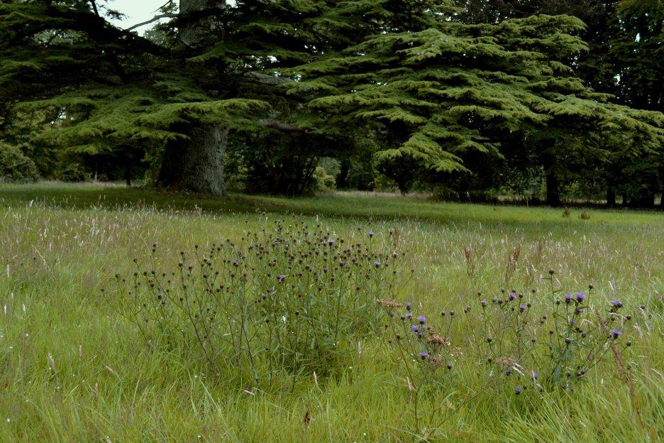 Borris House Gardens