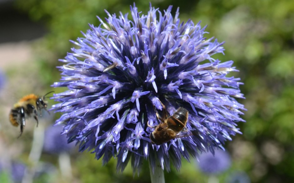 Calendar of Plants for Bees | Greenside Up