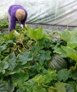 Cooking Pumpkins in the Community | greensideup.ie