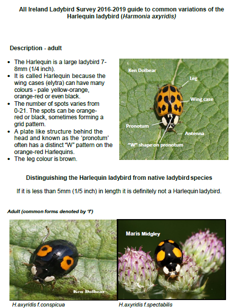 Why People Are Freaking Out About the Harlequin Ladybird