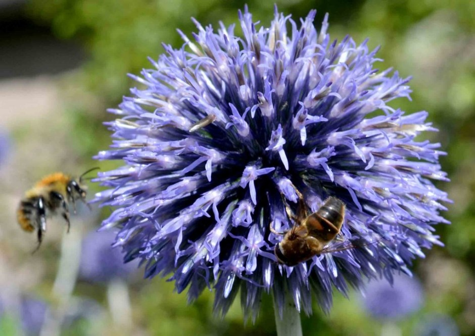 How to help bees and pollinators in the garden