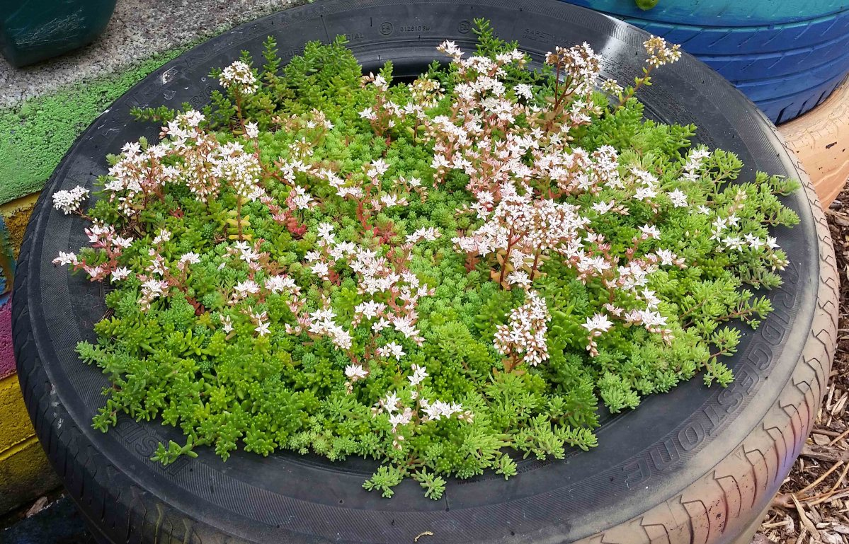 How To Build A Sedum Living Green Roof Structure