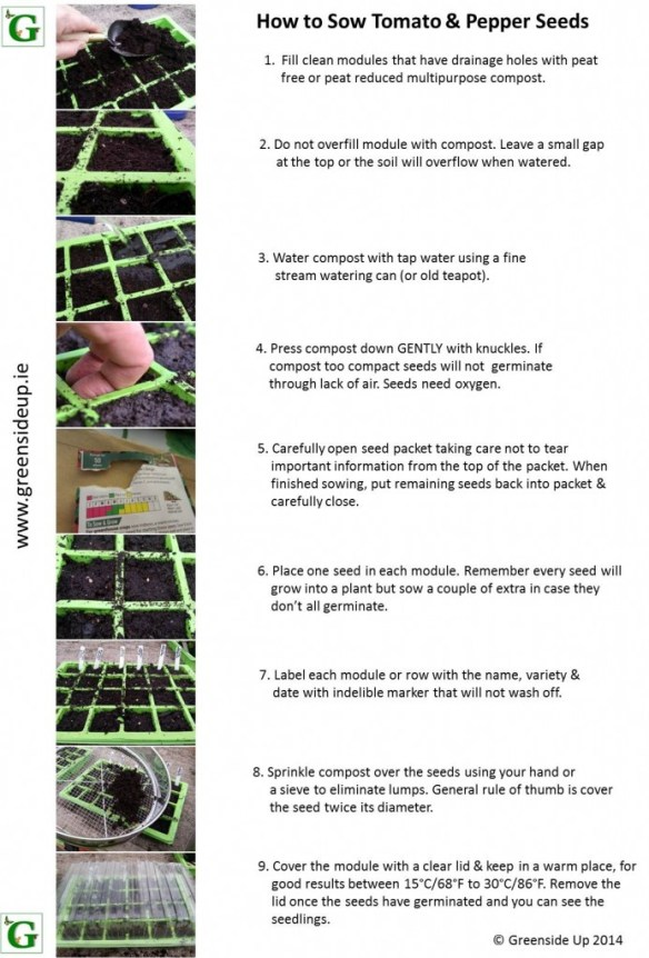 How to Grow Tomato & Pepper Plants from Seed