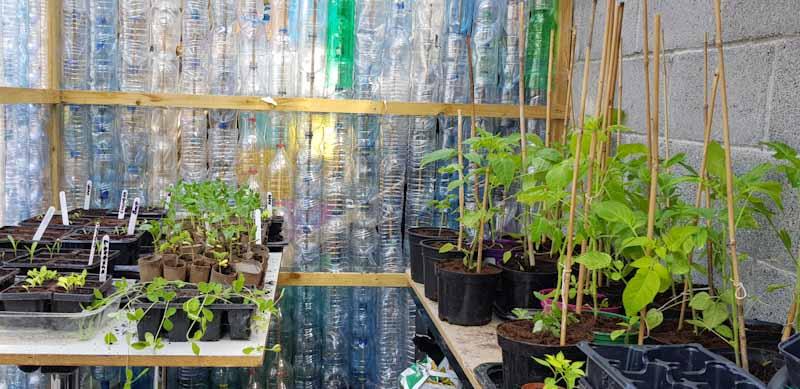 Lots of plants inside the Plastic Bottle Greenhouse